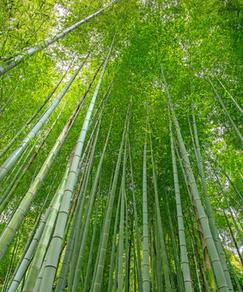 le bambou pour nos matelas bébé